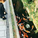 なに、ネズミはいないのか? 鯉が泳ぐ日本のきれいすぎる「排水溝」を見た外国人の反応