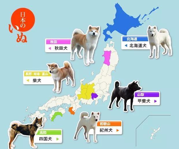 「日本のものはどうしてなんでも可愛いの?」「日本って犬肉食うんだっけ?」日本犬の原産地マップで盛り上がる海外掲示板