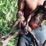 エイリアンか? 猿か? いや◯◯◯だよ‥ 南米で発見された謎の動物をめぐって盛り上がる海外の議論