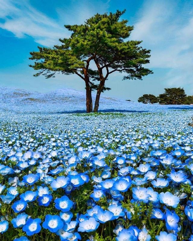 青い絨毯のような日本の風景が美しすぎると海外で話題に