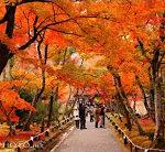 これほど美しい国が他にあるだろうか!? 日本の紅葉の美しさに驚嘆する外国人たち